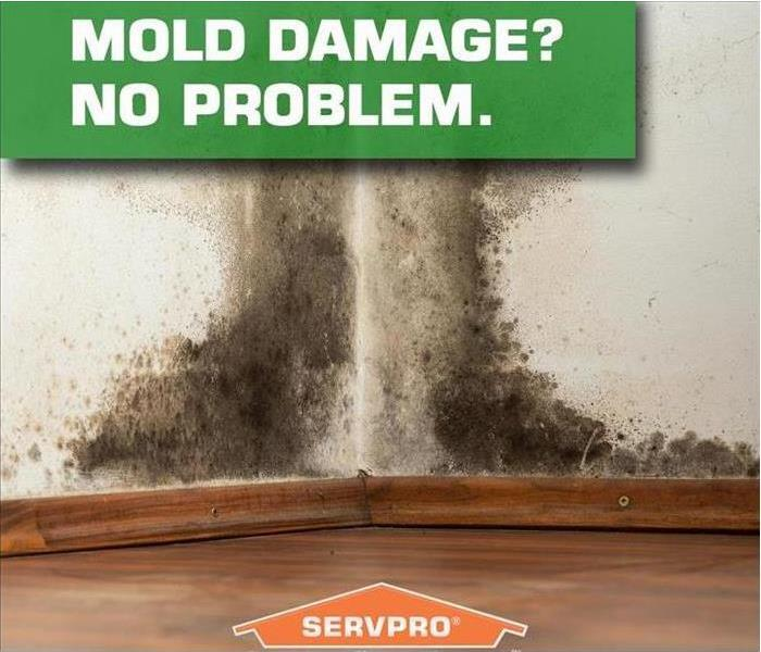 Mold Remediation If You See Signs of Mold,  Call Us Today